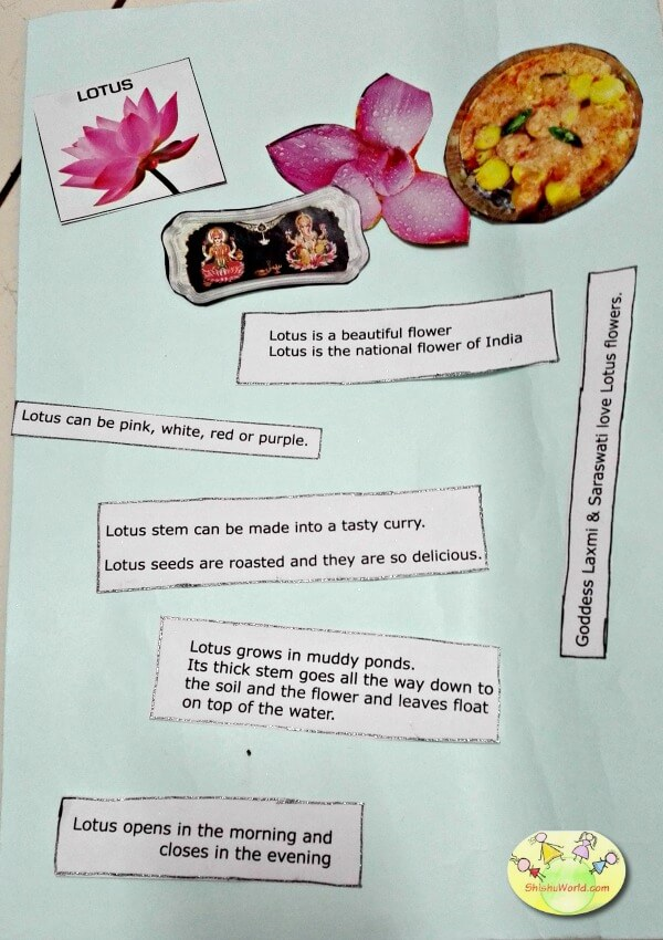 Show n tell activity for kids - Lotus flower