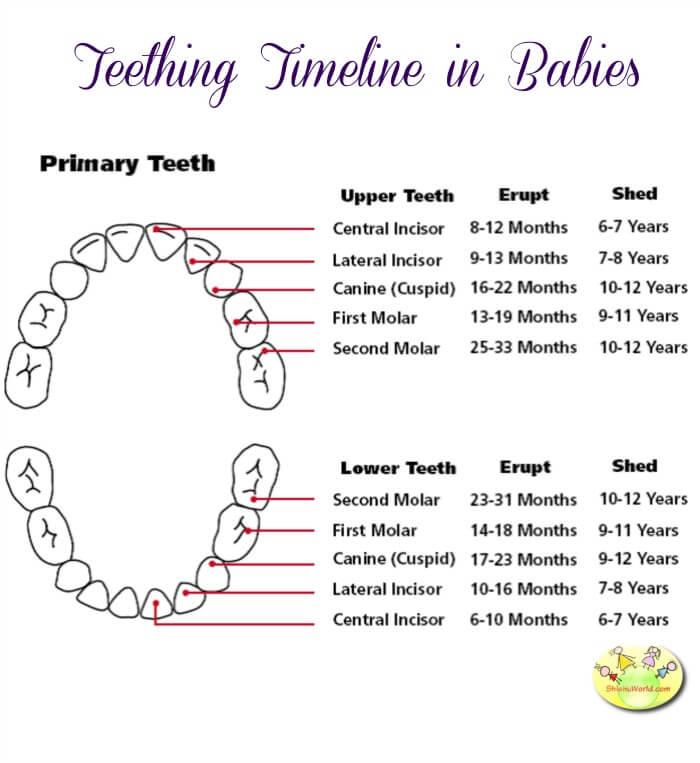 Teething Chart in Babies